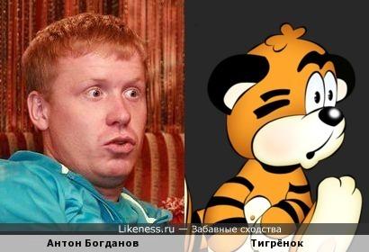 Антон Богданов похож на Тигрёнка
