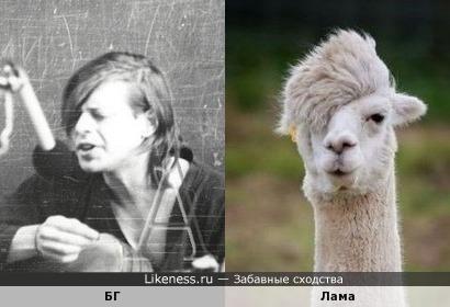 БГ похож на ламу
