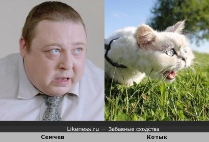 Семчев похож на котыка