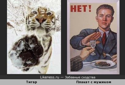 Тигар похож на мужука с плаката