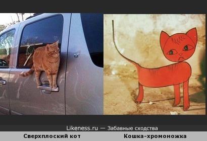 Сверхплоский кот пожож на кошку -хромоножку