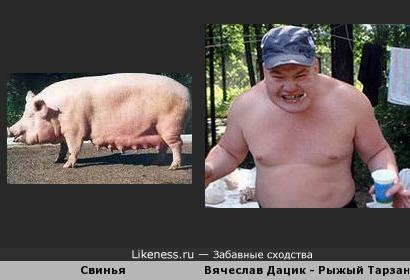 рыжый Тарзан Вячеслав Дацик- свинья