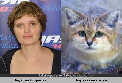 Авдотья Смирнова похожа на барханную кошку