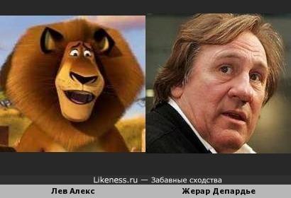 Лев Алекс похож на Жерара Депардье