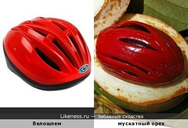 Велошлем похож на мускатный орех