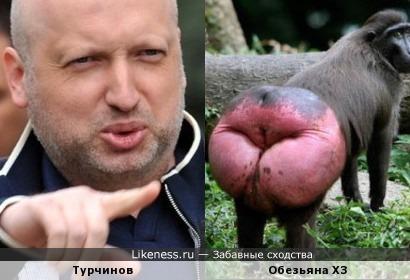 Турчинов - Это задница