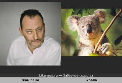Жан Рено похож на мишку коала