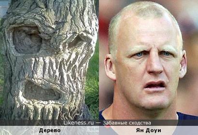 Это дерево напомнило Яна Доуи