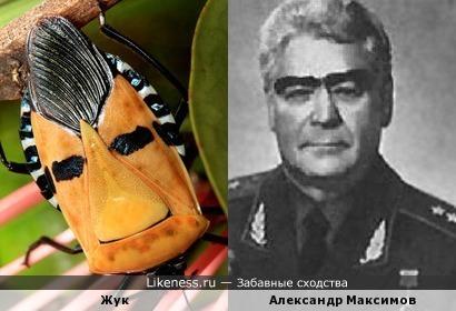 Этот Жук похож на Александра Максимова