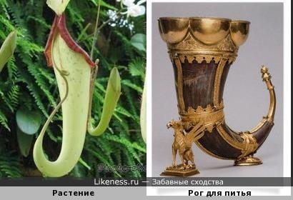 Экзотическое растение напомнило рог для питья