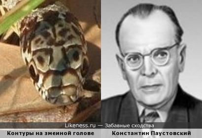 Контуры на змеиной голове напоминают Константина Паустовского