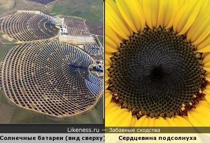 Солнечные батареи напоминают подсолнух