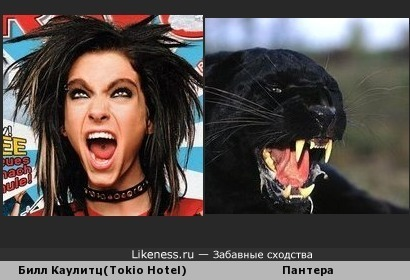Билл Каулитц похож на пантеру:)