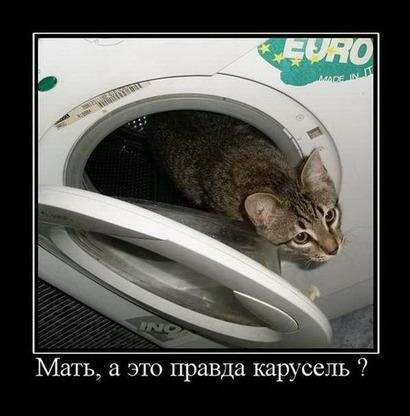Карусель и кот