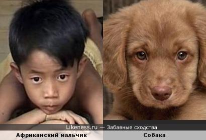 Африканский мальчик и собака