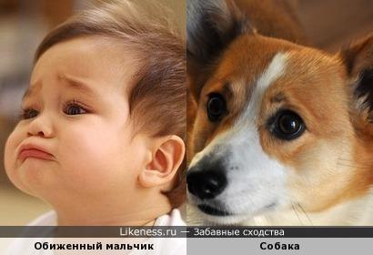 Обиженный мальчик и собака