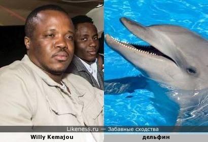 Вилли похож на дельфина, да и дельфину можно дать имя Вилли