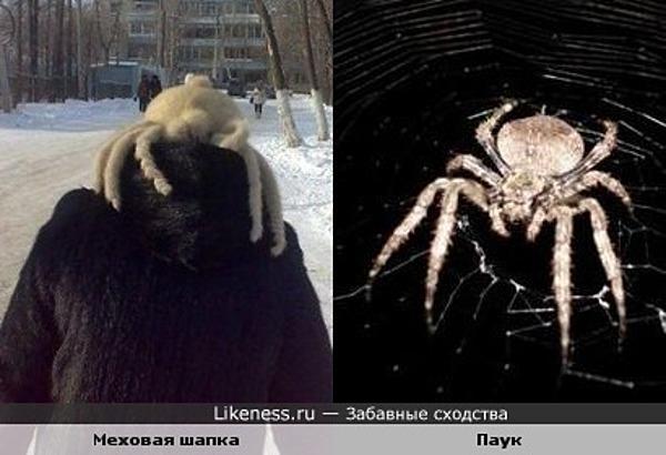 Меховая шапка похожа на паука