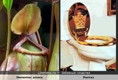 Растение похоже на унитаз