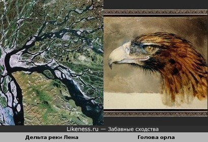 Дельта реки Лена напоминает голову орла