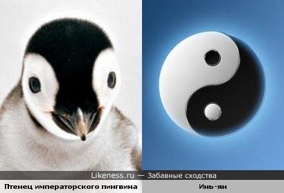 Птенец пингвина - Инь и Ян