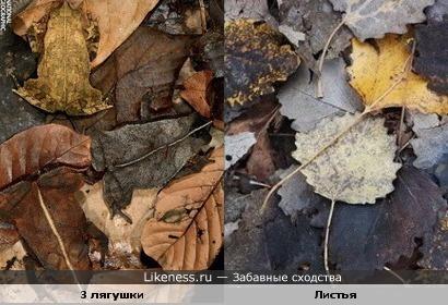 Эти лягушки похожи на опавшие листья
