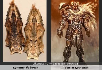 Куколки бабочек напоминают доспехи воина