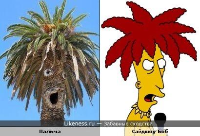 Пальма и Сайдшоу Боб