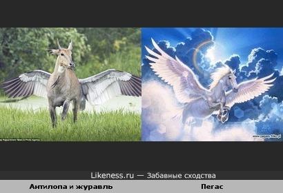 Антилопа и журавль за ней напоминают Пегаса