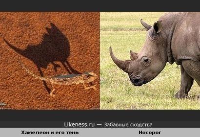 Тень от хамелеона похожа на голову носорога