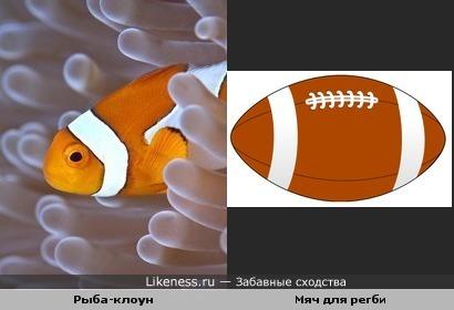 Рыбка и мяч для регби