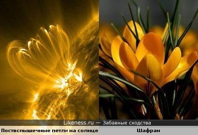 Вспышки на солнце напоминают цветок