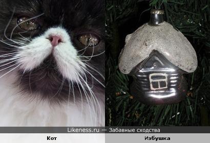Мордочка кота похожа на заснеженную избушку