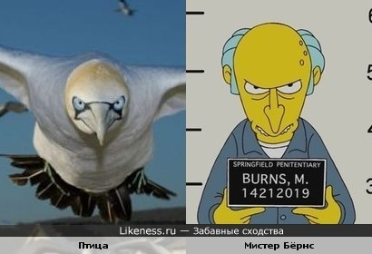 """Эта птица напомнила Мистера Бёрнса из """"Симпсонов"""""""