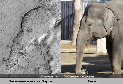 Слон на Марсе