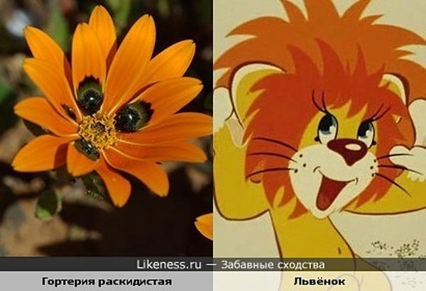 Это растение напоминает львёнка из мультфильма