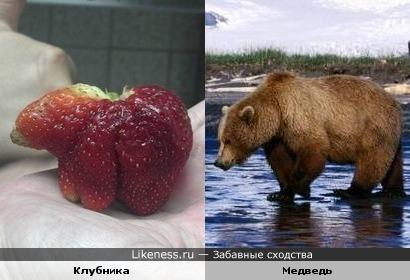 Медвежья ягода