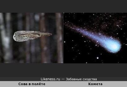 Летящая сова напоминает комету