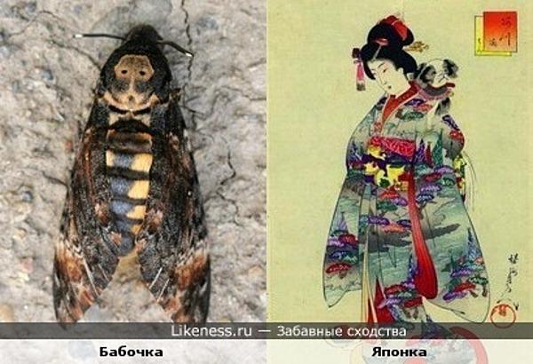 Эта бабочка похожа на японку в национальном костюме ^__^