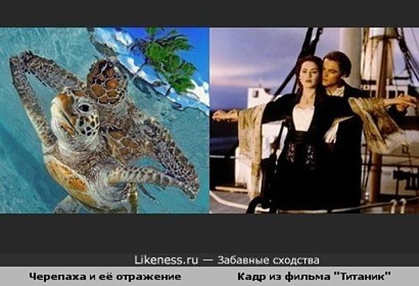 "Эта черепаха напомнила кадр из ""Титаника"""