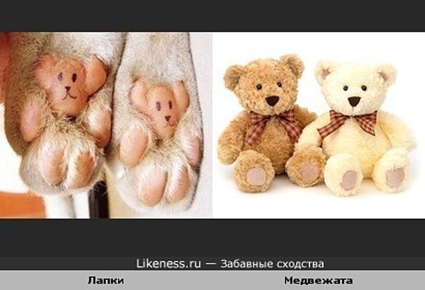 Подушечки на лапках похожи на медвежат