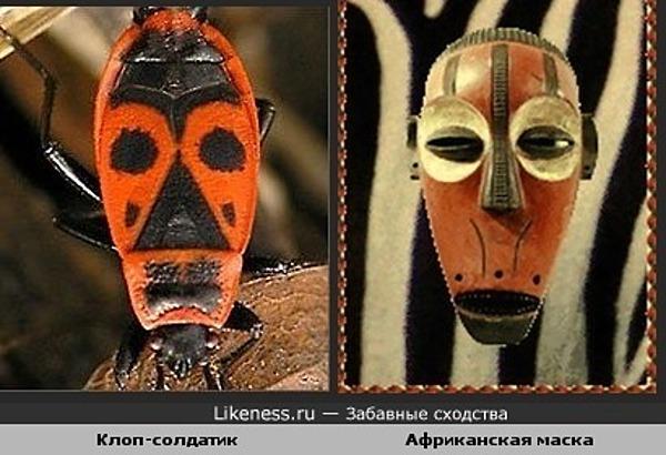 Клоп и африканская маска похожи