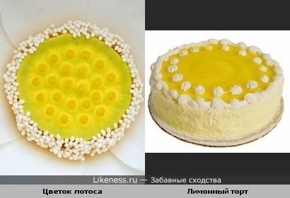 Цветок лотоса и лимонный торт