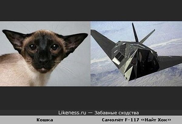 Кошка и самолёт