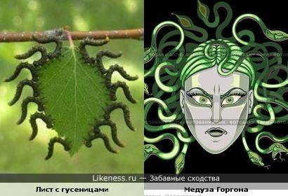 http://img.likeness.ru/uploads/users/1779/caterpillar_Medusa.jpg