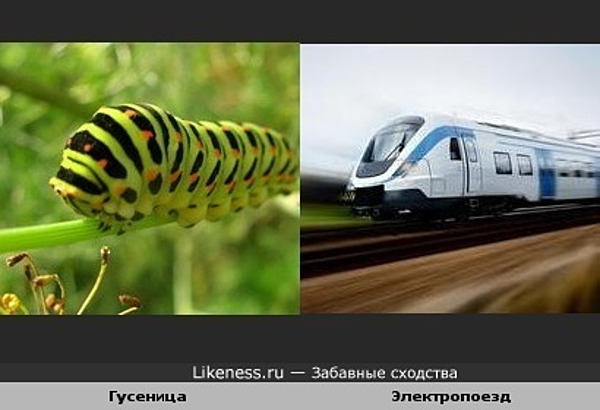Гусеница похожа на электропоезд