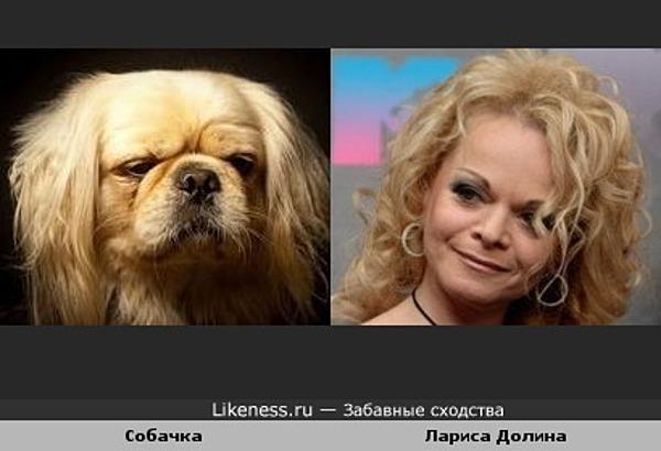 Эта собачка похожа на Ларису Долину