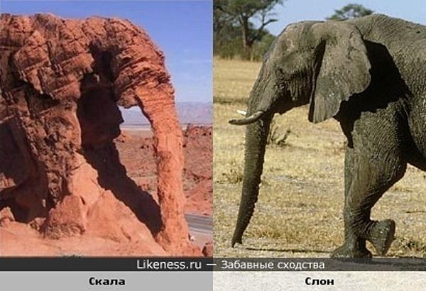 Скала похожа на слона