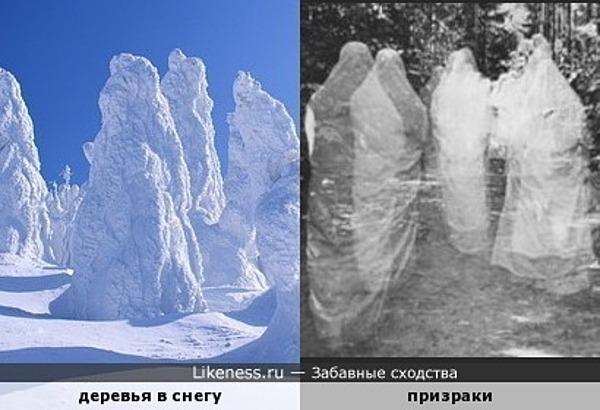 Деревья в снегу похожи на призраков