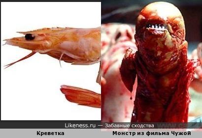 Креветка похожа на монстра из фильма чужой